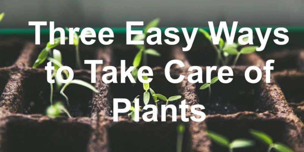 take care of plant