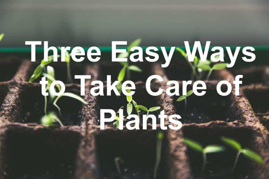 three easy ways to take care of plants. Black Bedroom Furniture Sets. Home Design Ideas