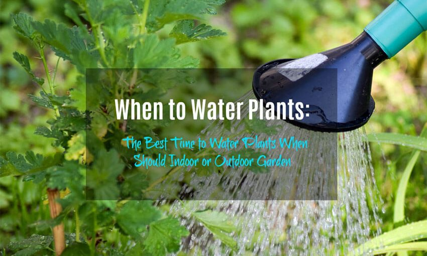 When to Water Plants