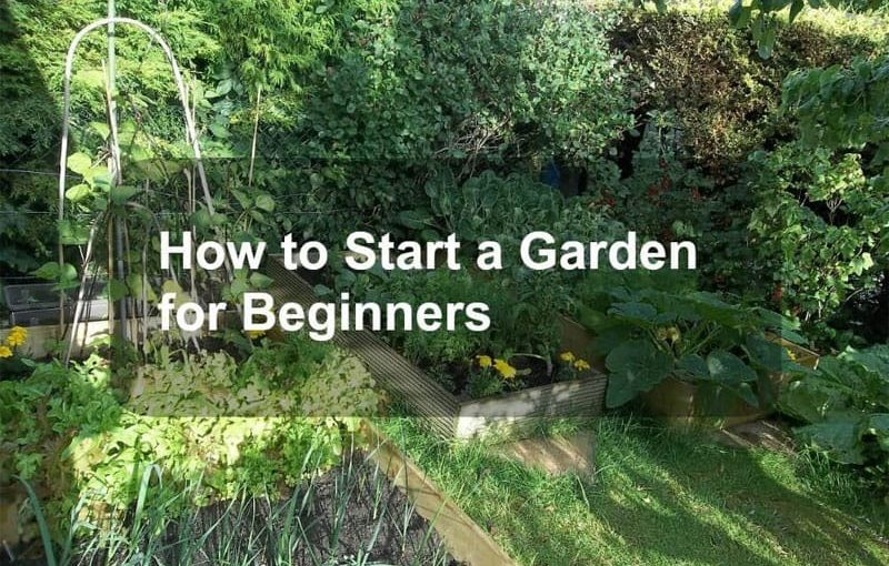How To Start A Garden For Beginner