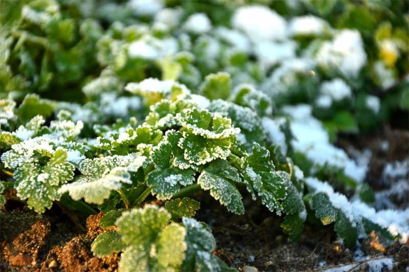 How To Grow Better Vegetables in Winter